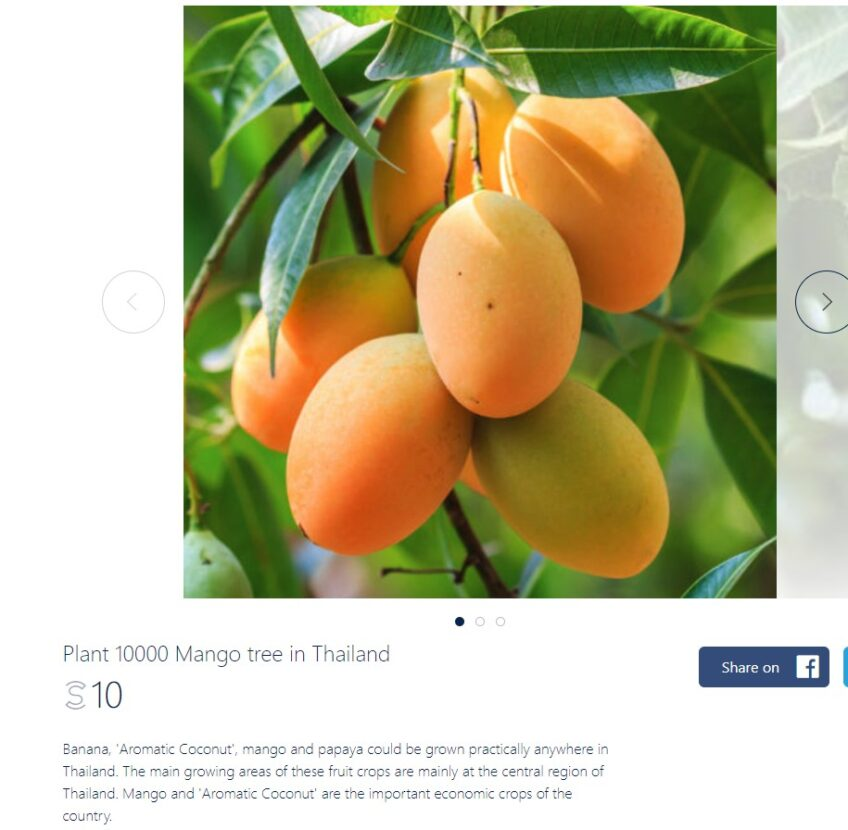 Upcoming Offers – Adopt a Mango Tree, Sunscreen & Discounts